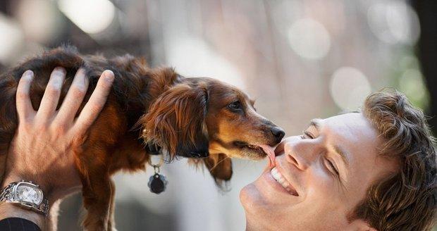 Proč psi olizují lidi?