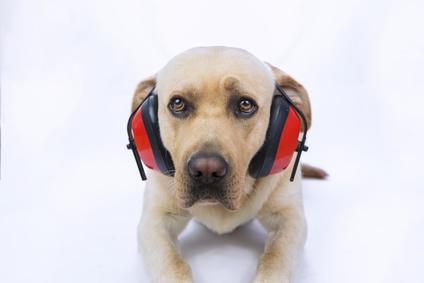 Správná péče o uši psa a kočky