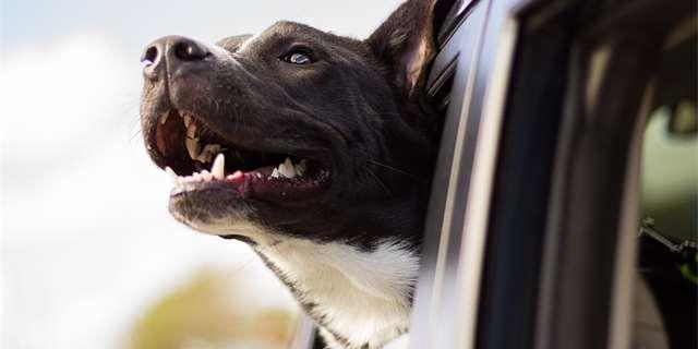 Jas správně převážet psa a kočku v autě
