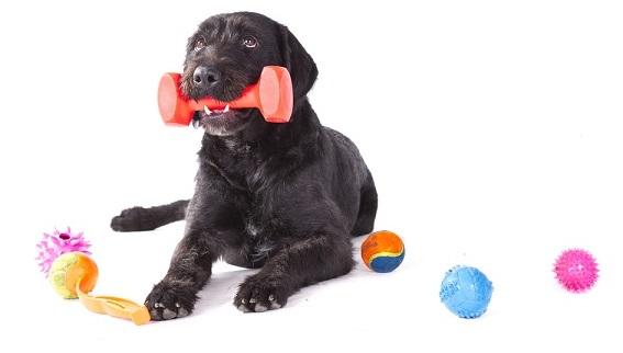 Hračky, kterými uděláte svému psovi radost