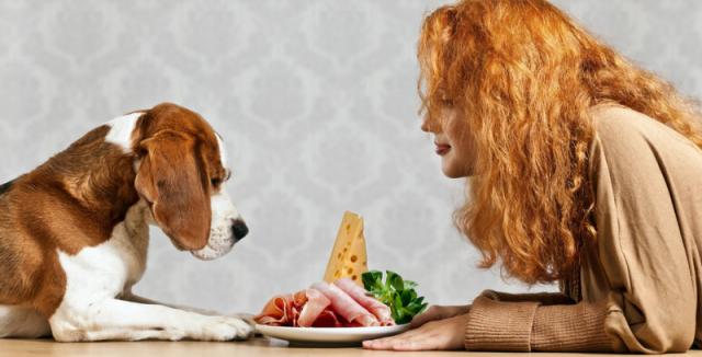 Kvalitní krmivo versus bílkoviny