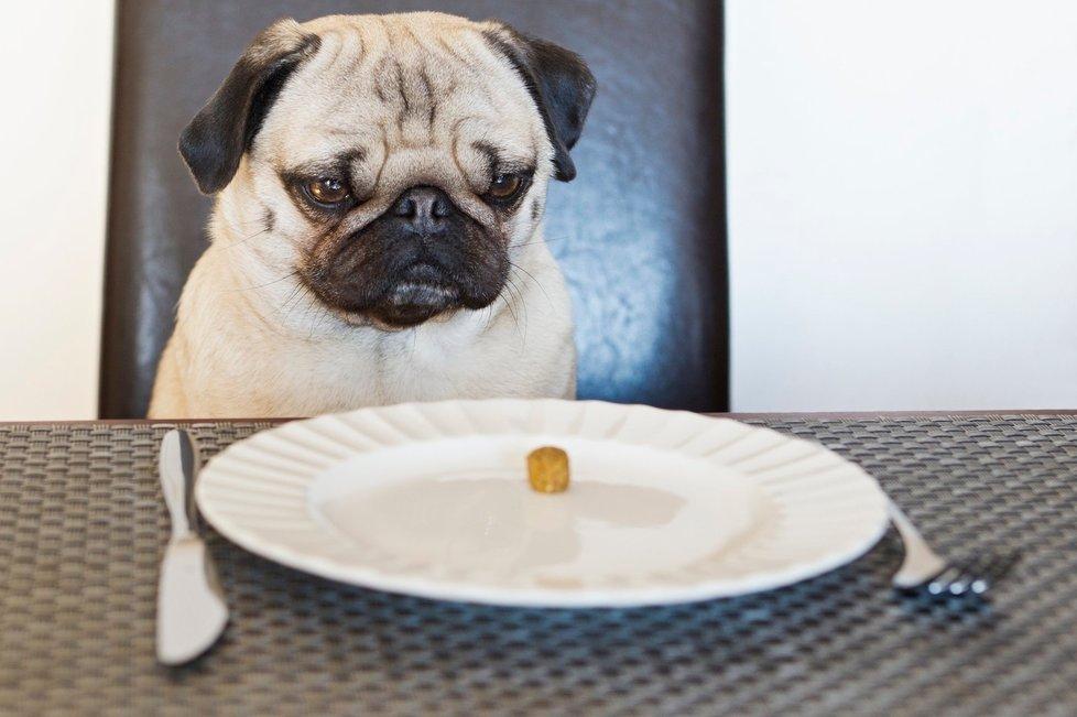 Potraviny, které byste svému mazlíčkovi nikdy dávat neměli