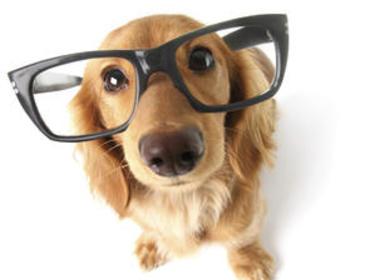 11 činností, kterými zkracujete vašemu psovi život