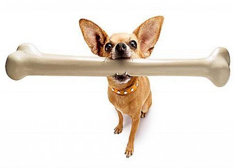 Pes a kosti: vařené a zvěřinové jsou životu nebezpečné
