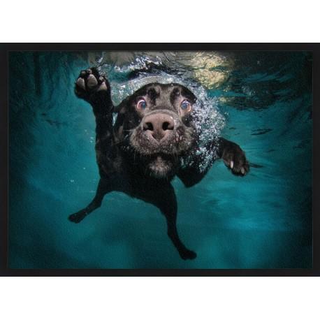 Miluje Váš pes vodu? Pak zpozorněte!