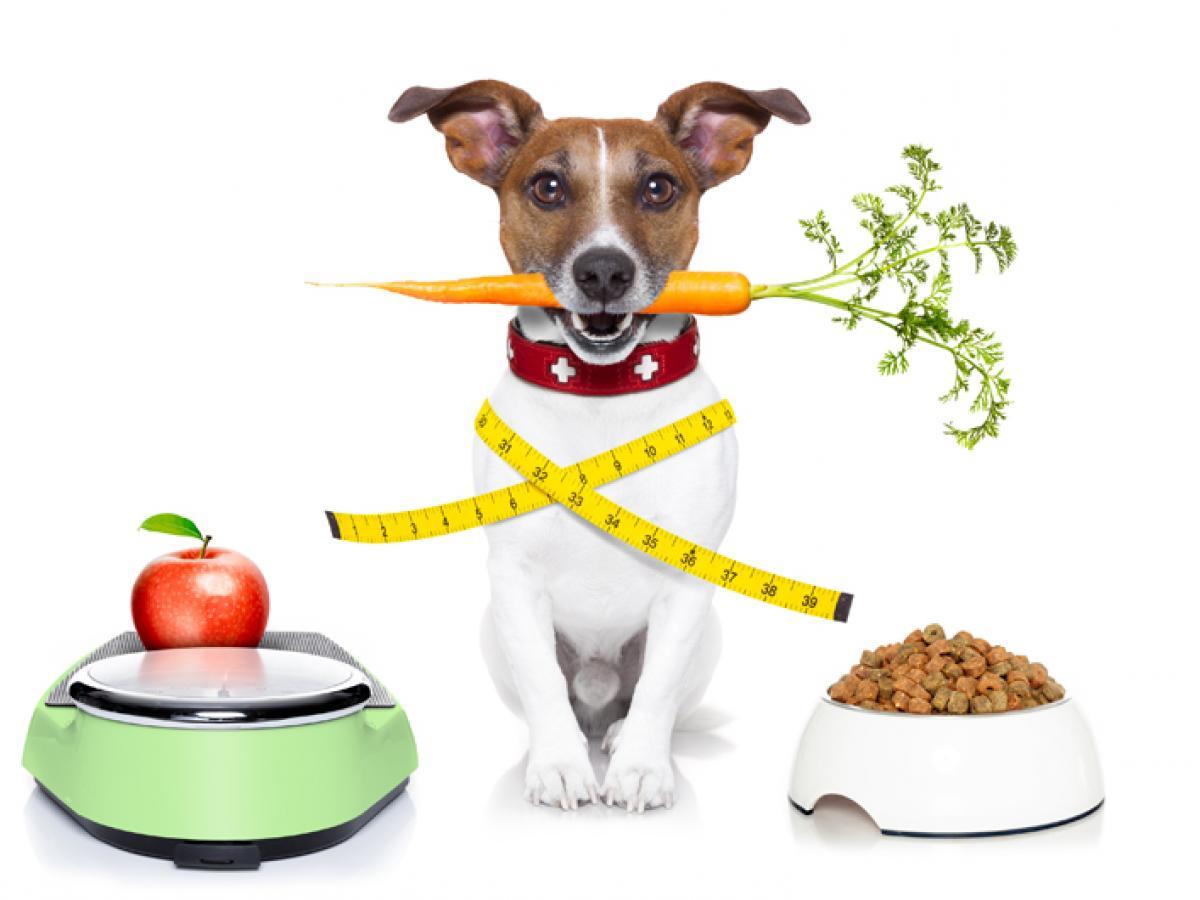 Jaterní dieta pro psy