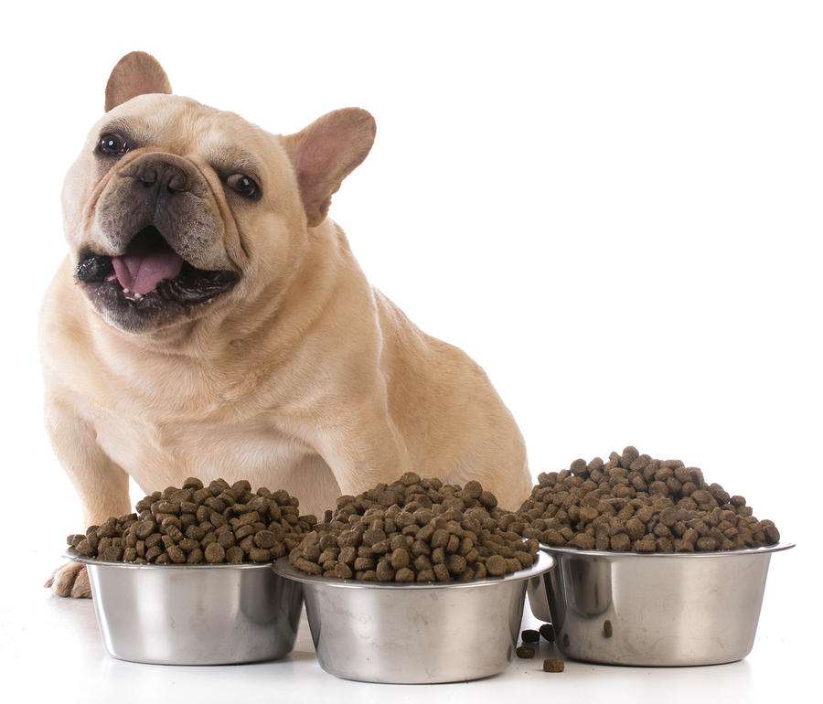 feed-your-dog