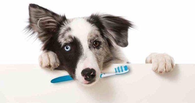 2356537-img-psi-cisteni-zubu-chrup-zubni-kartacek-dentalni-hygiena-v1
