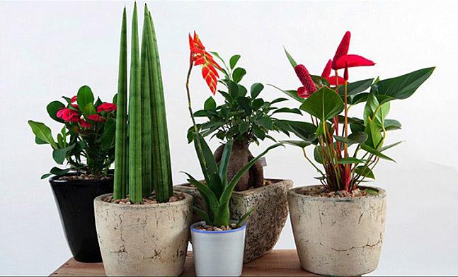 Správná péče o pokojové rostliny