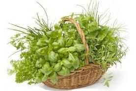 Správná péče o bylinky