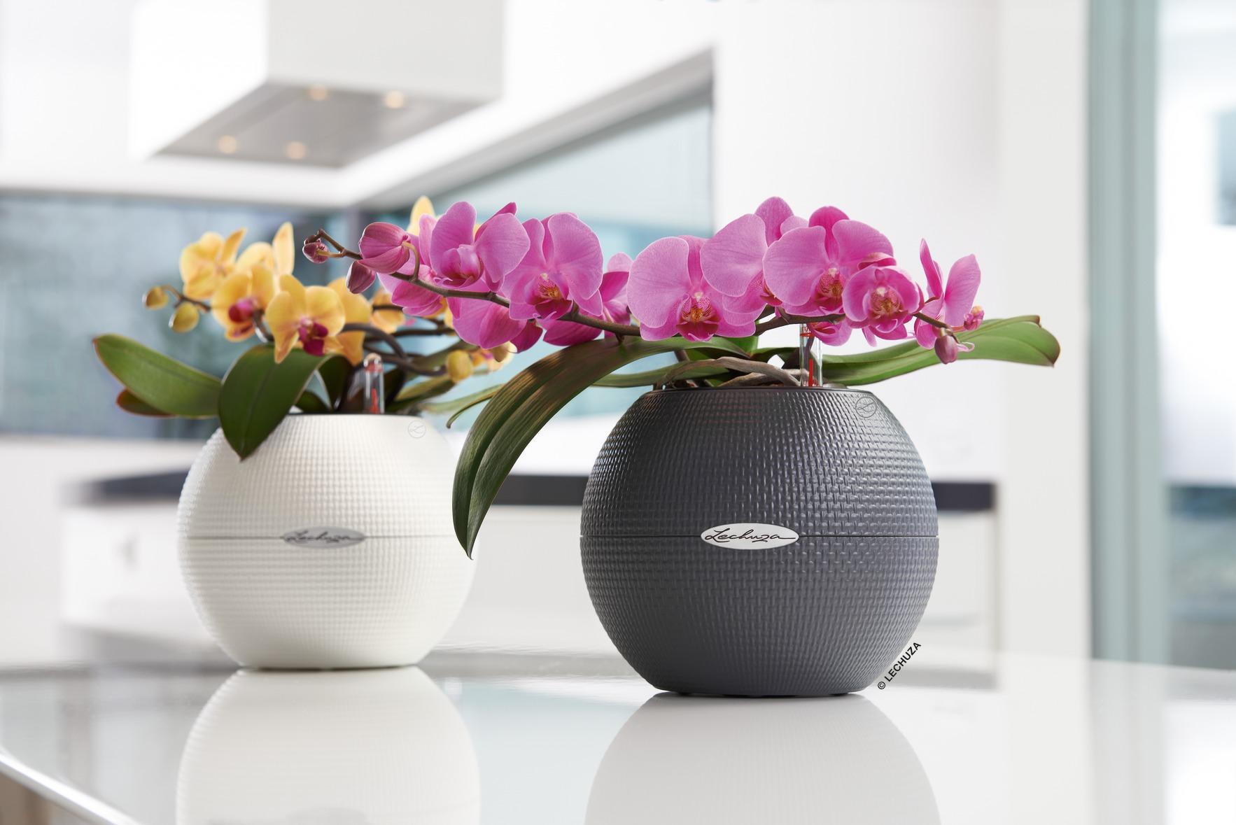 Rostliny zlepšující vzduch v místnostech