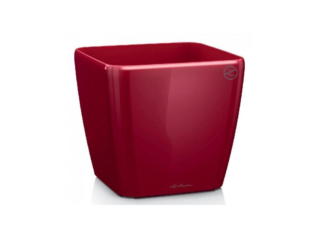 Lechuza Quadro LS 21 - scarlet