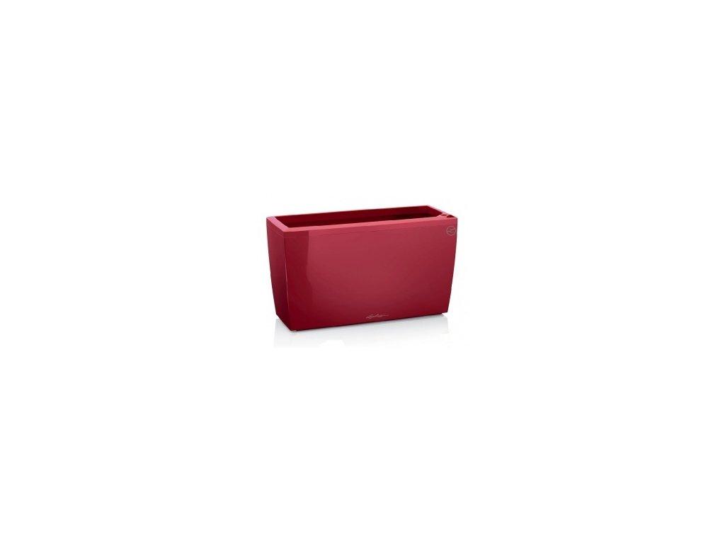 Lechuza Cararo 75 - scarlet