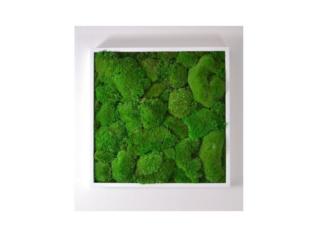 Mechový obraz 50x50 cm - bochánky