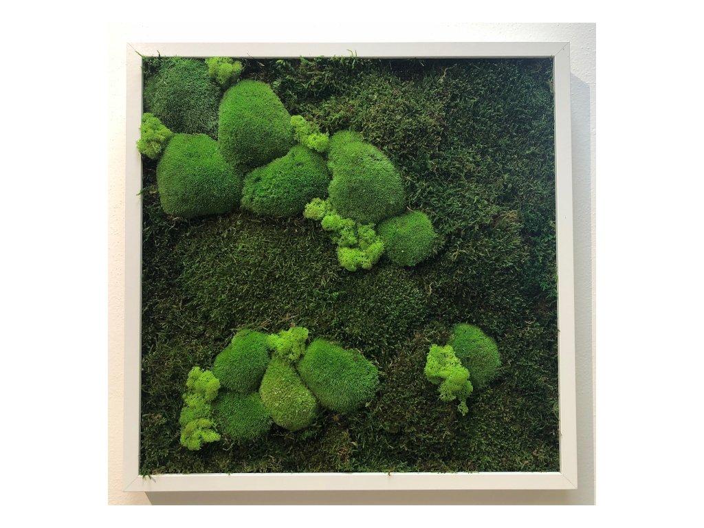 Mechový obraz 50x50 cm - mix bochánky, plochý mech a lišejník