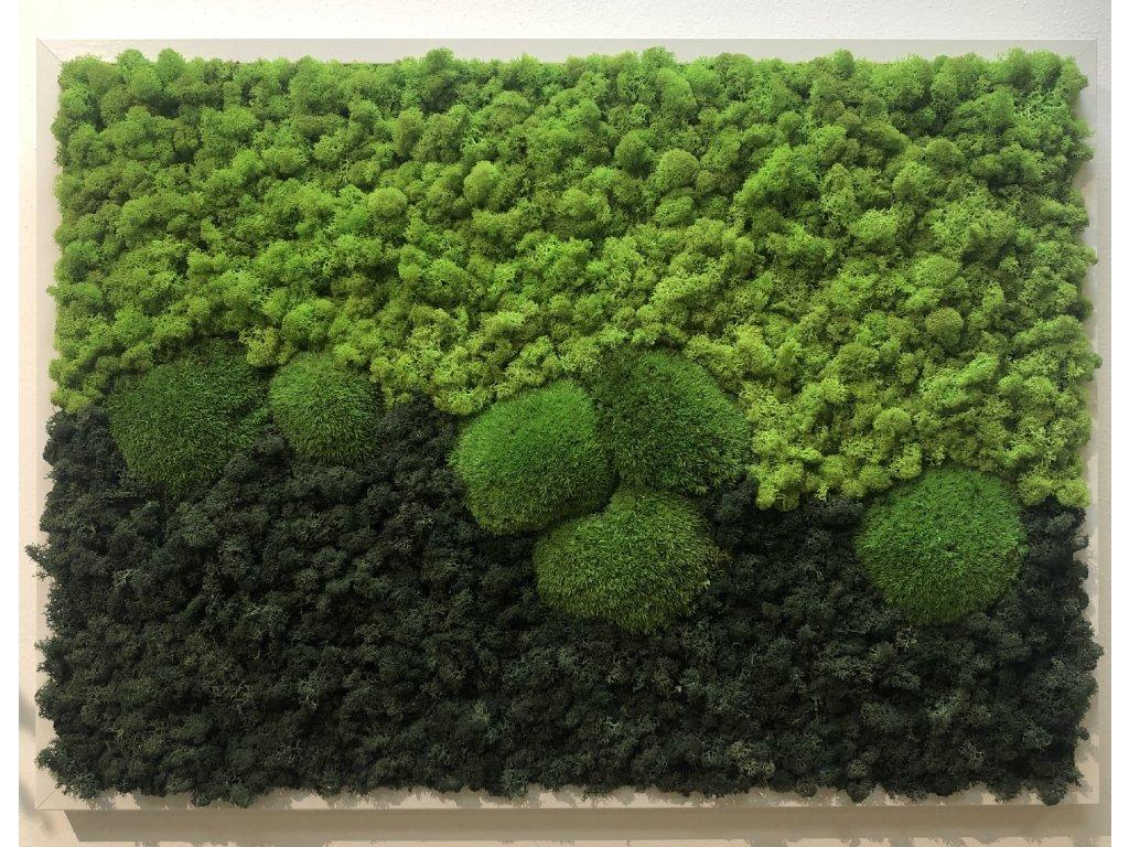 Mechový obraz 40x50 cm - mix lišejník a bochánky