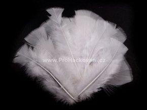 peříčka 11-17 cm Bílá