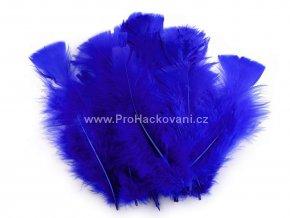 Peříčka 11-17 cm královská modrá