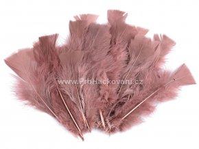 peříčka 11-17 cm Růžověhnědá