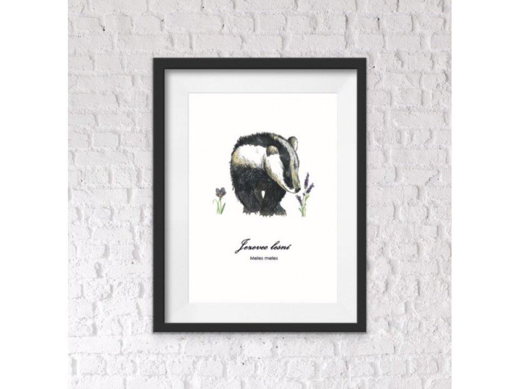 jezevec plakát