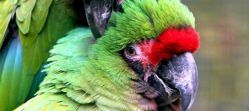 10 neobvyklých ptačích miláčků, které můžete mít doma i vy