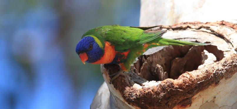 Léto jako hrozba pro papoušky: Jak je chránit před horkem?