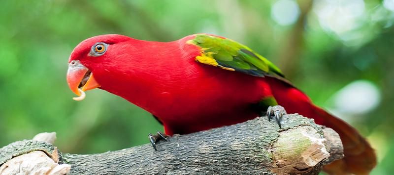 Krmte své papoušky různorodě: Dopřejte jim sušený hmyz, zamilují si vás!