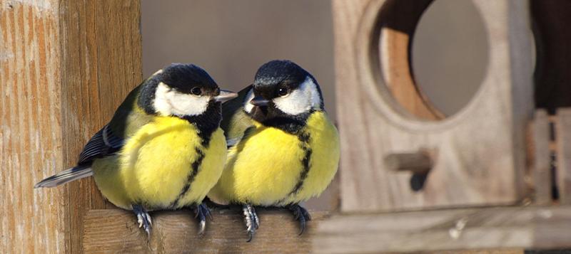 Jak a čím dokrmovat venkovní ptactvo a na co si dát pozor?