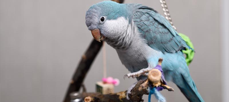 Dva návody na výrobu bezpečné a zábavné hračky pro papouška