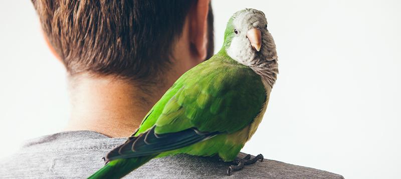 Jaký papoušek se ke mně hodí?