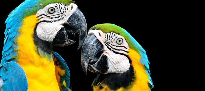 Jak papouškovi pomoct s přirozeným obrušováním drápků a zobáku?