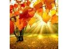 Podzimní edice