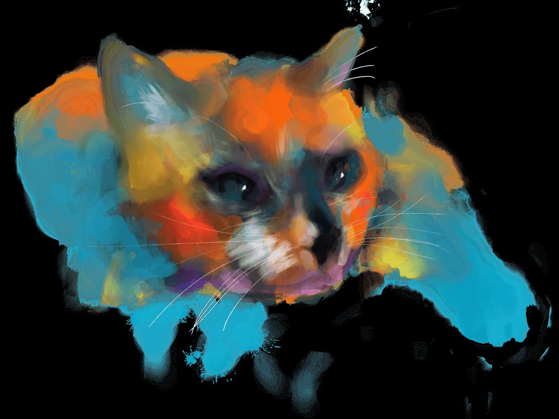 Balení IR vhodná pro kočky