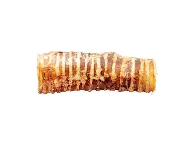 Průdušnice,trachea 13 cm