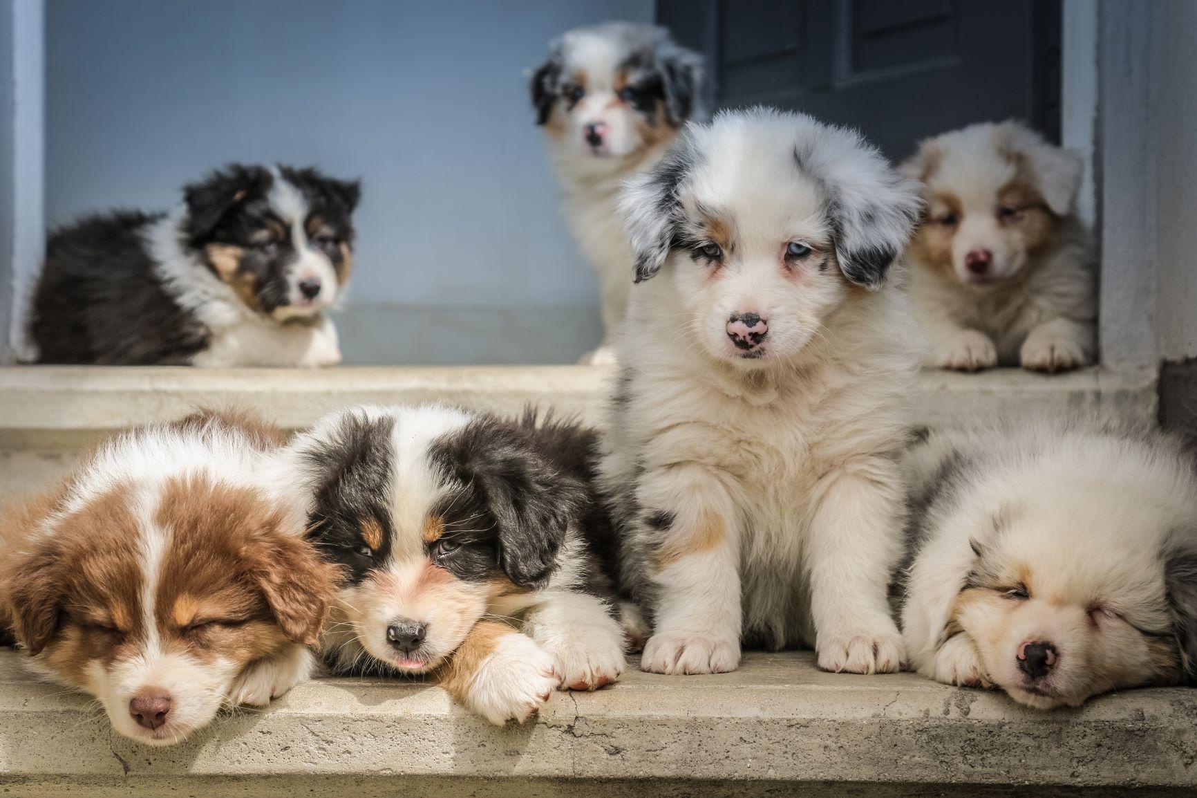 Výběr psího parťáka, který vám obrátí naruby celý vesmír