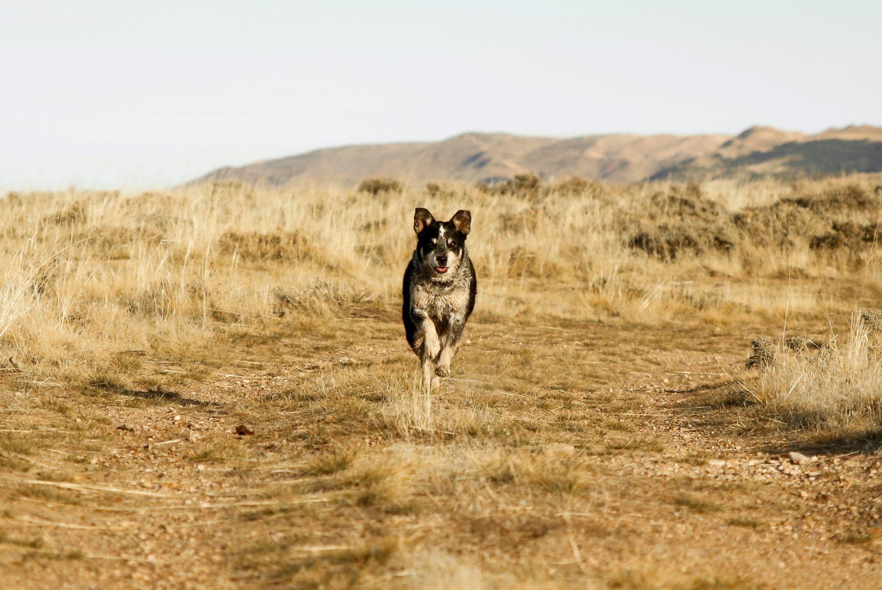 TOP 10 nejrychlejších psů Sluneční soustavy