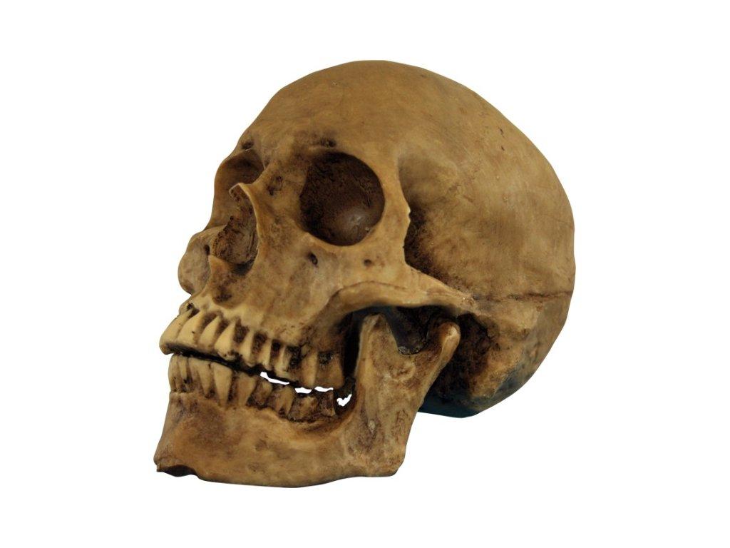 lebka z pryskyrice