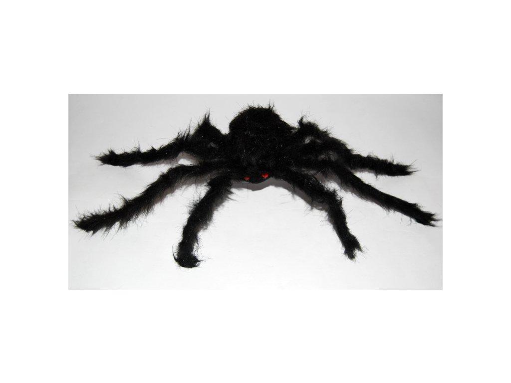 pavouk tarantulr