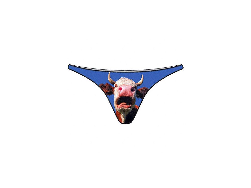 tanga krava