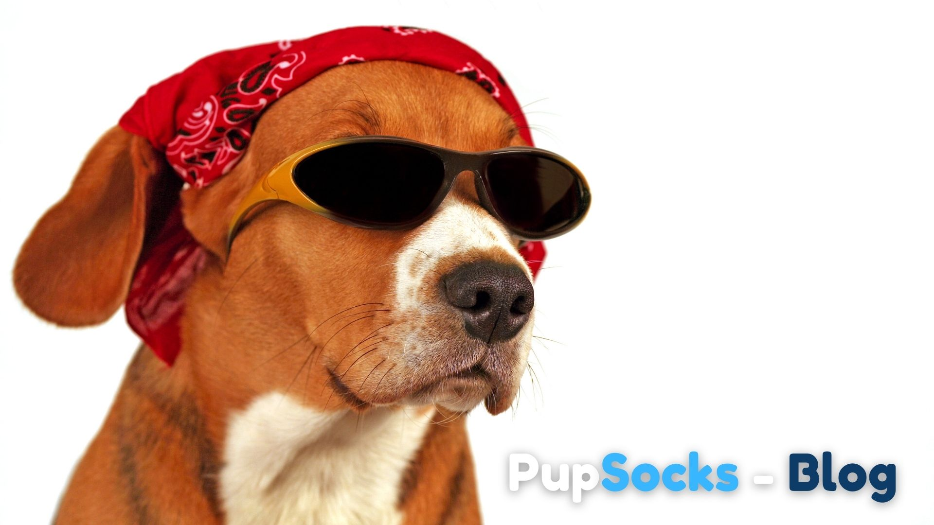 Jak pomoci psovi, když je mu vedro?