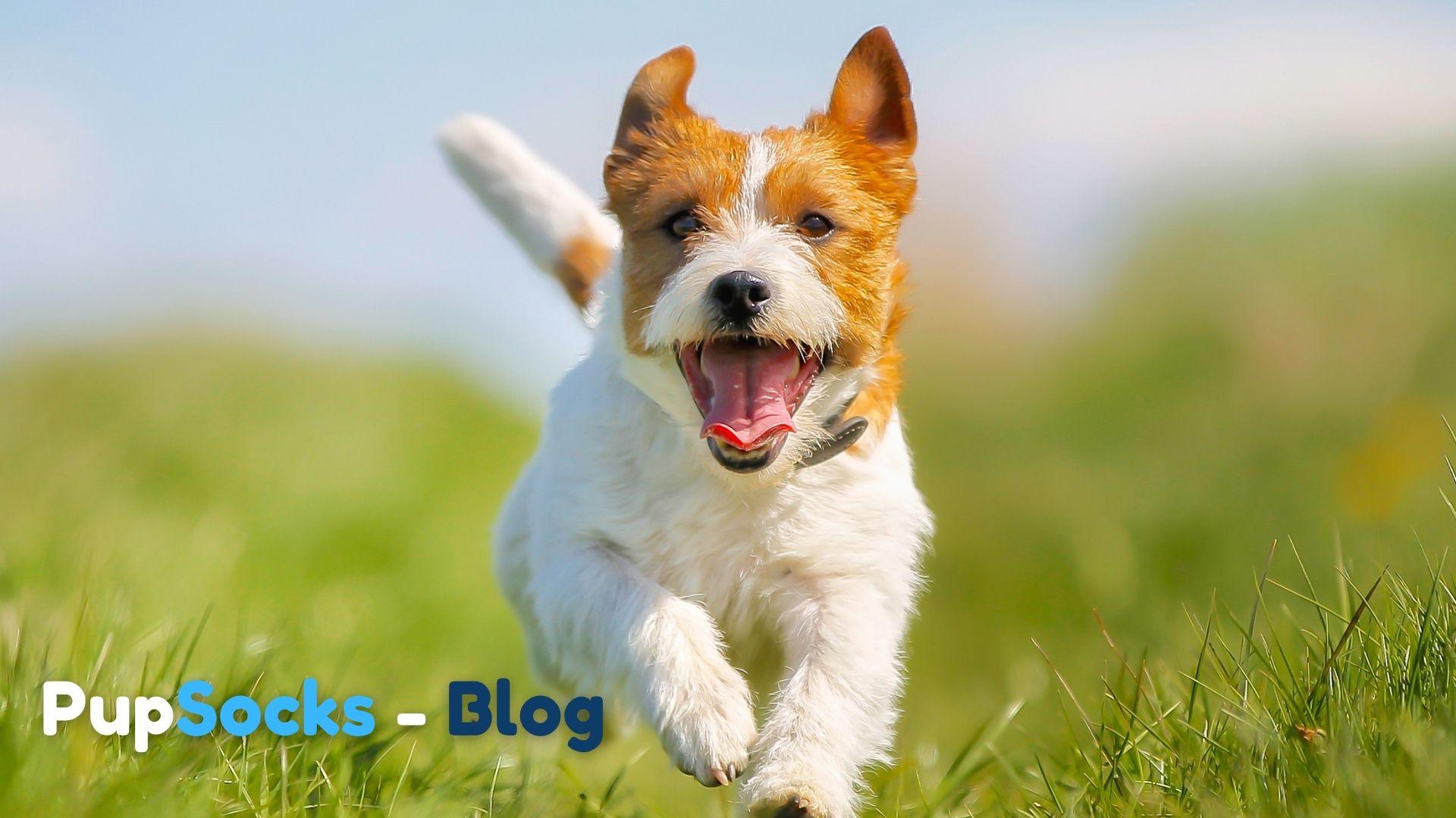 11 zajímavých faktů o psech