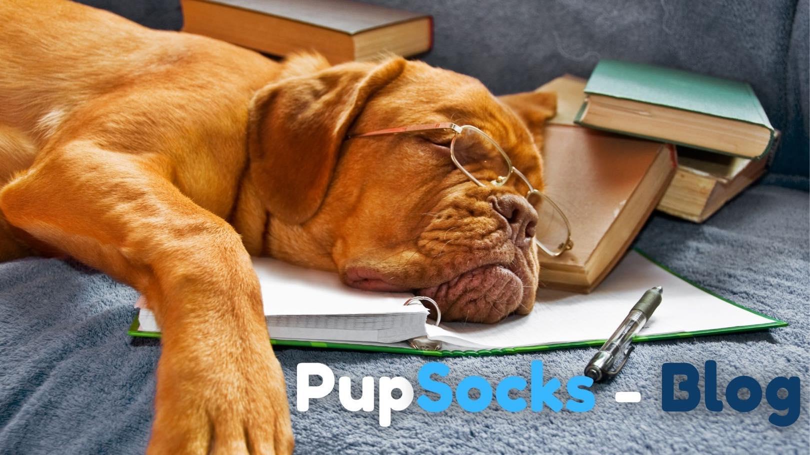 Psi pomáhají studentům