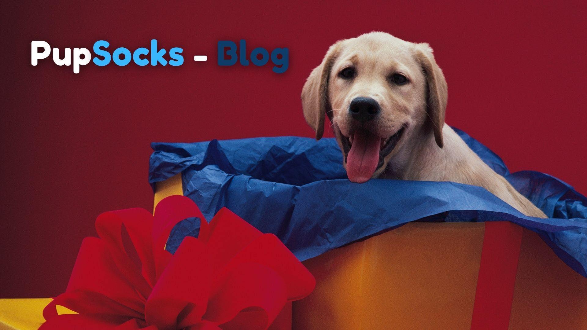 4 důvody, proč nedávat psa jako dárek