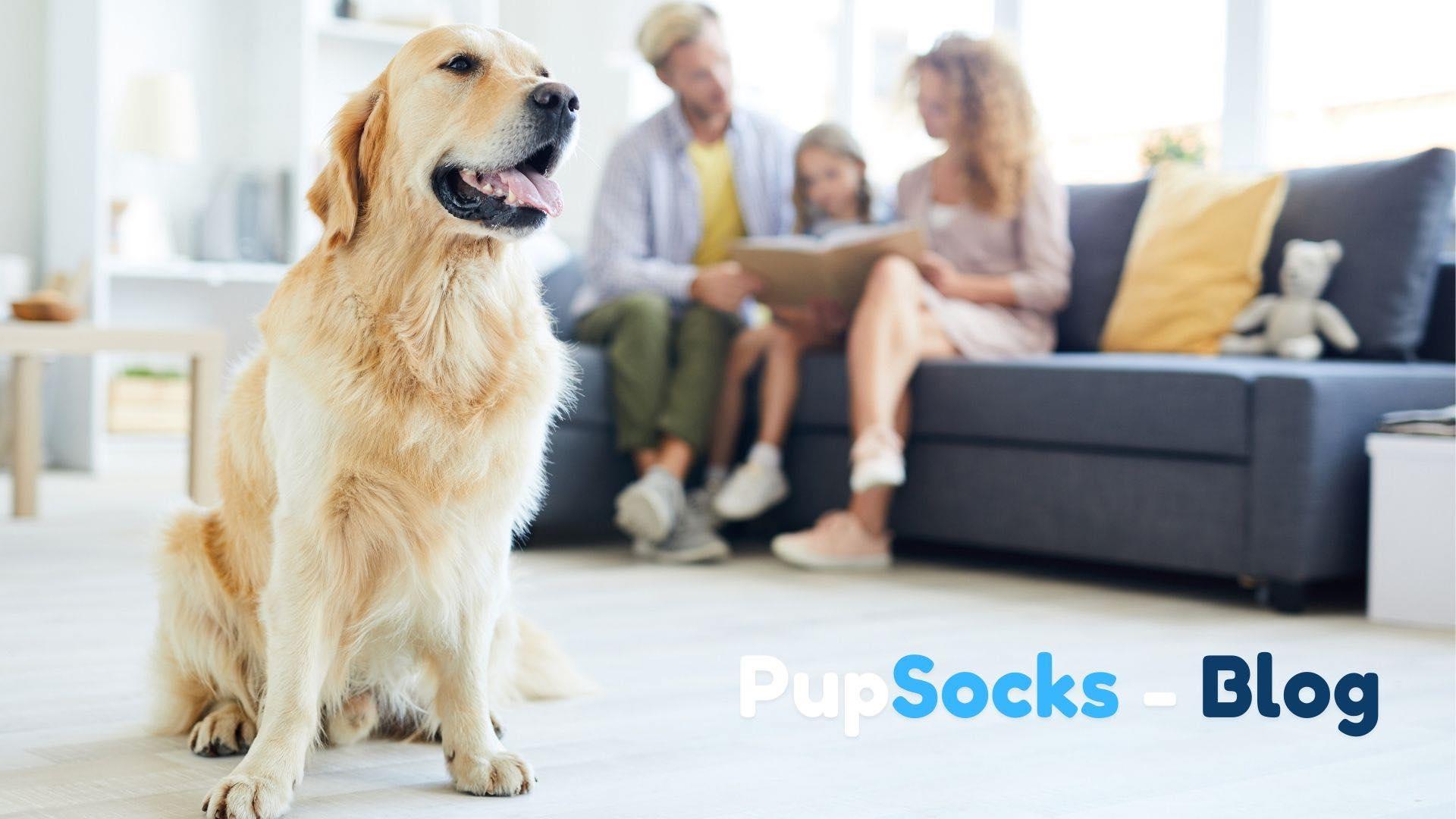 Dětství se psy snižuje riziko astmatu?