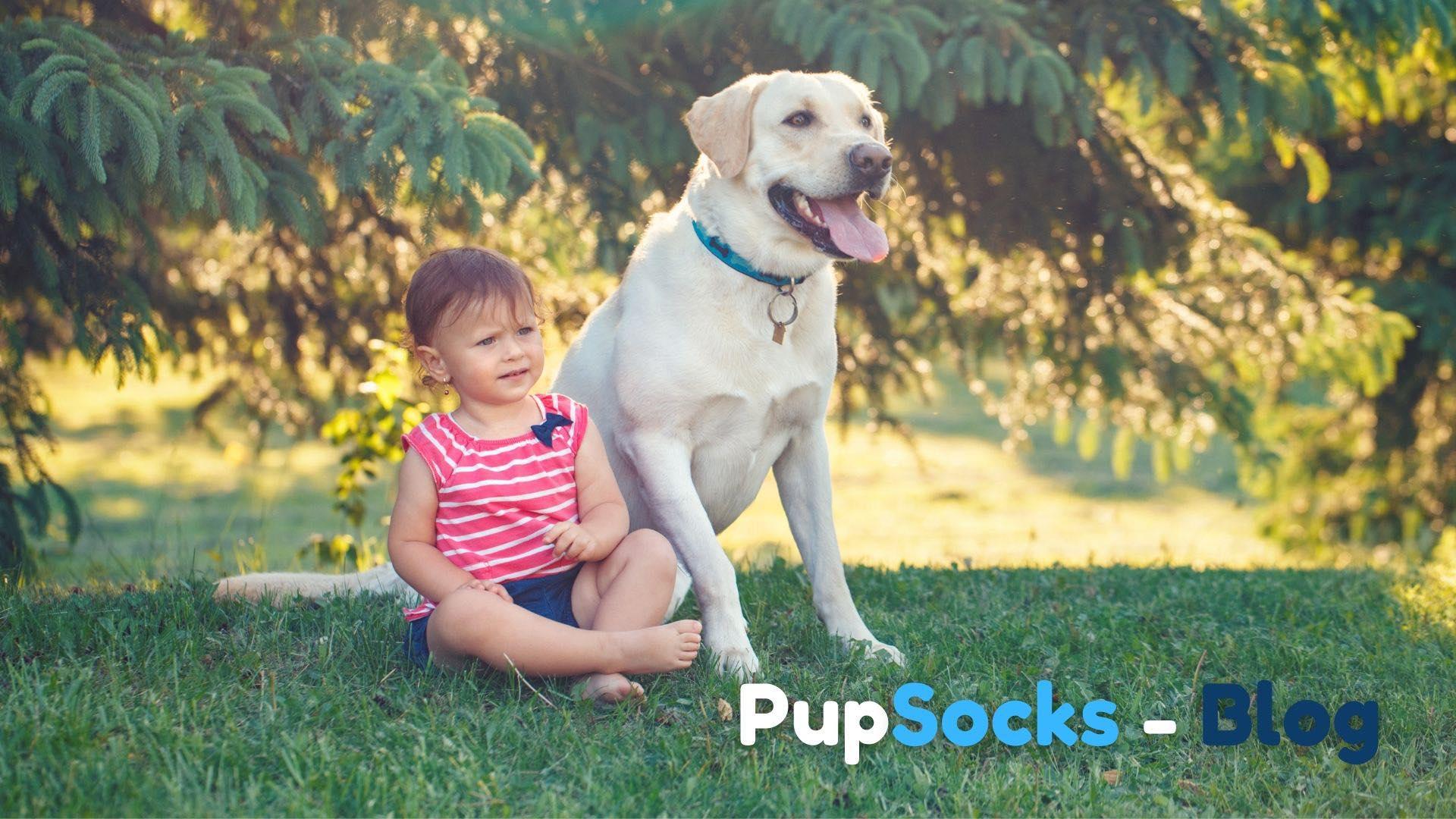 Jak spřátelit dítě se psem?