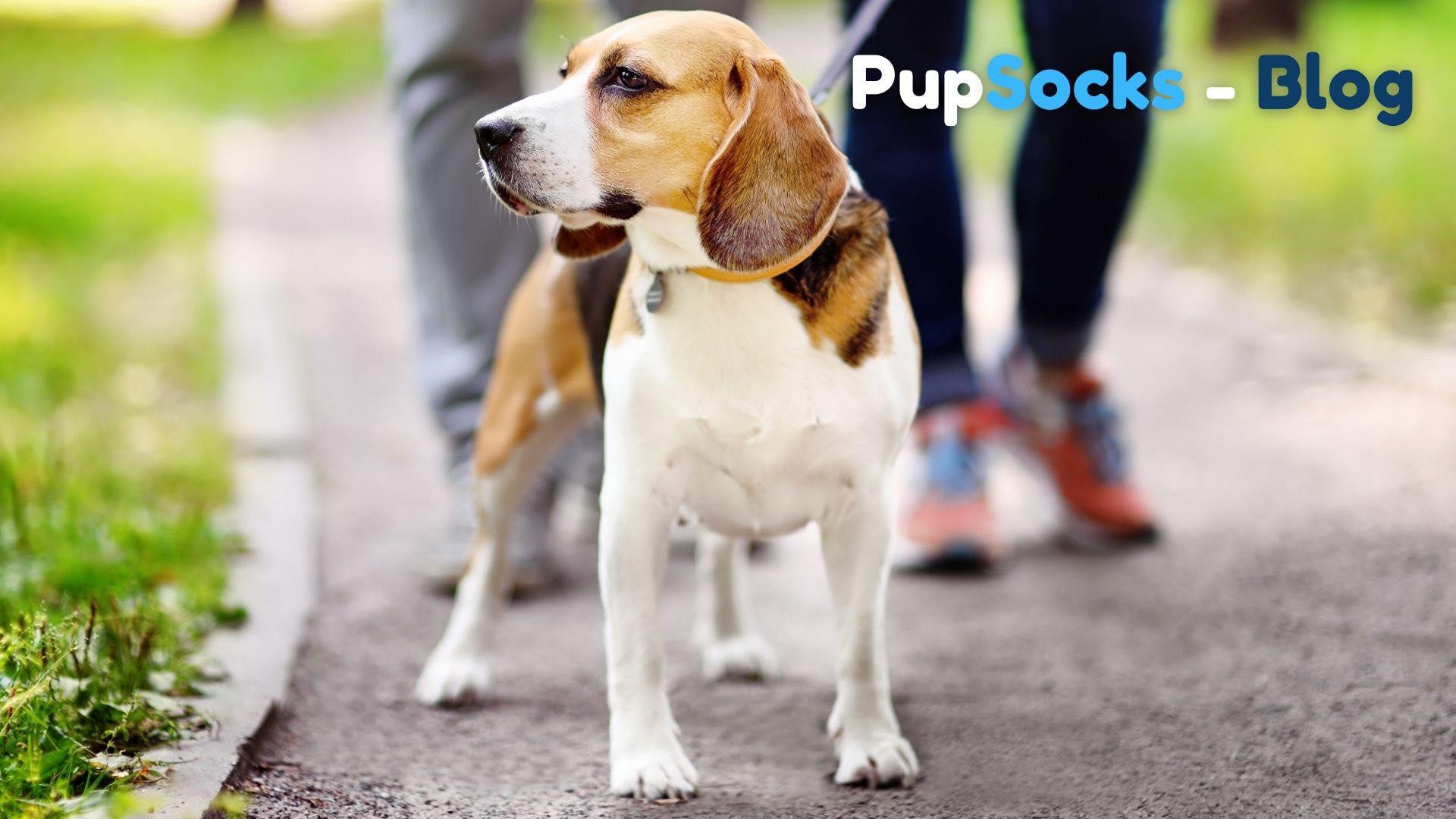 5 tipů na výlety se psy