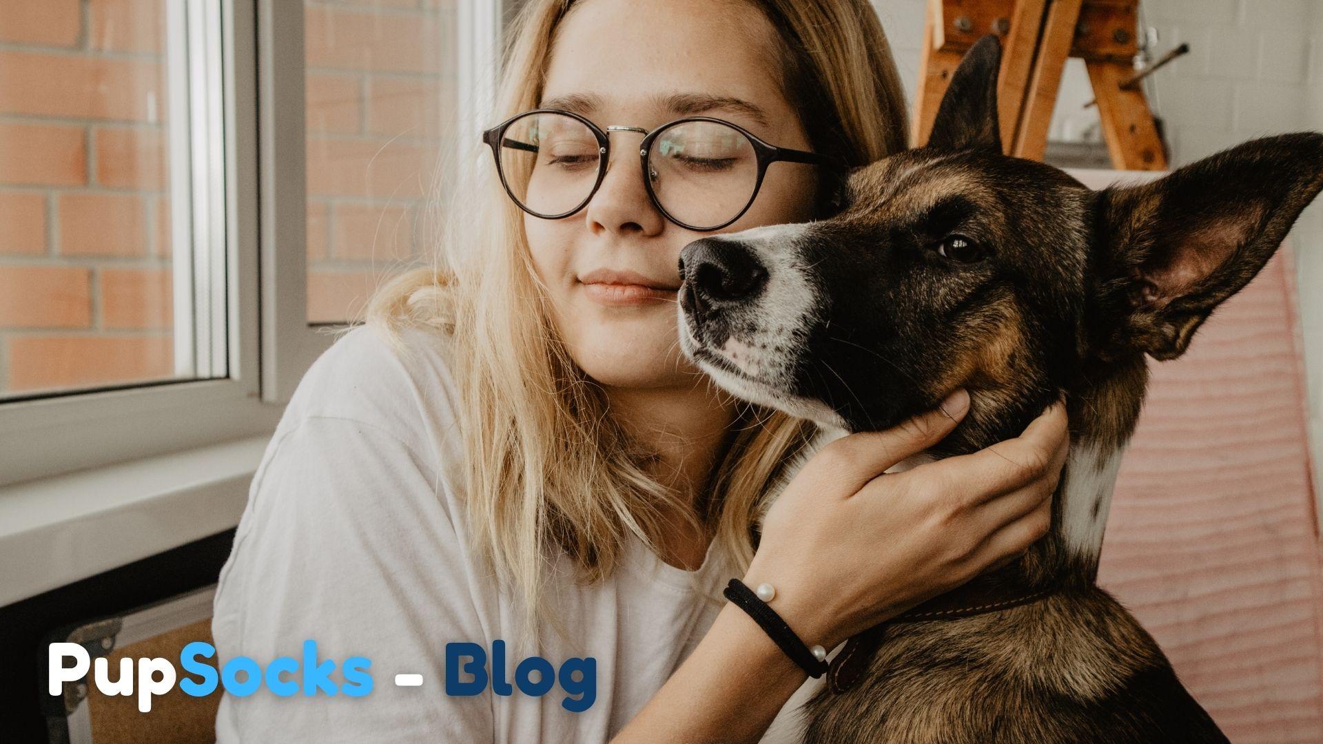 Nápad: pořídit si dospělého psa