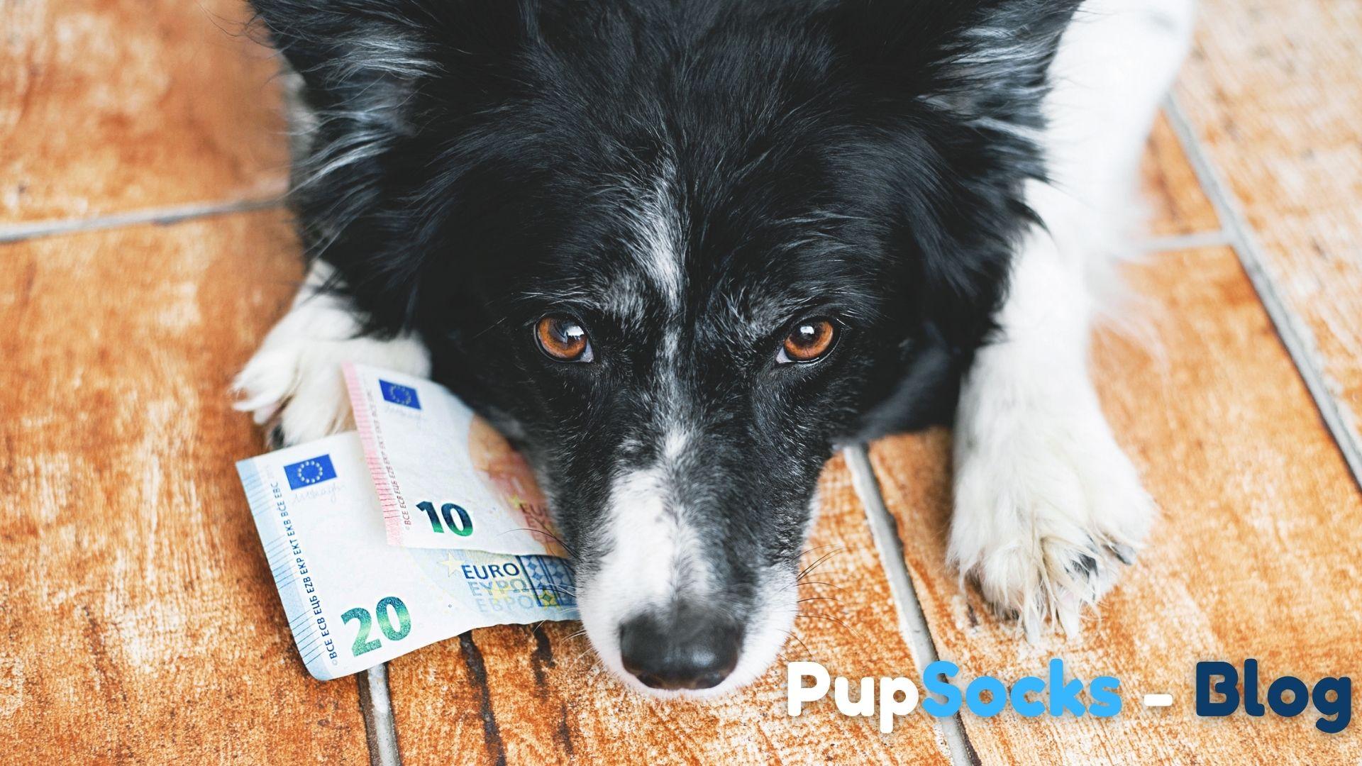 Proč utrácíme stále více peněz za své psy?