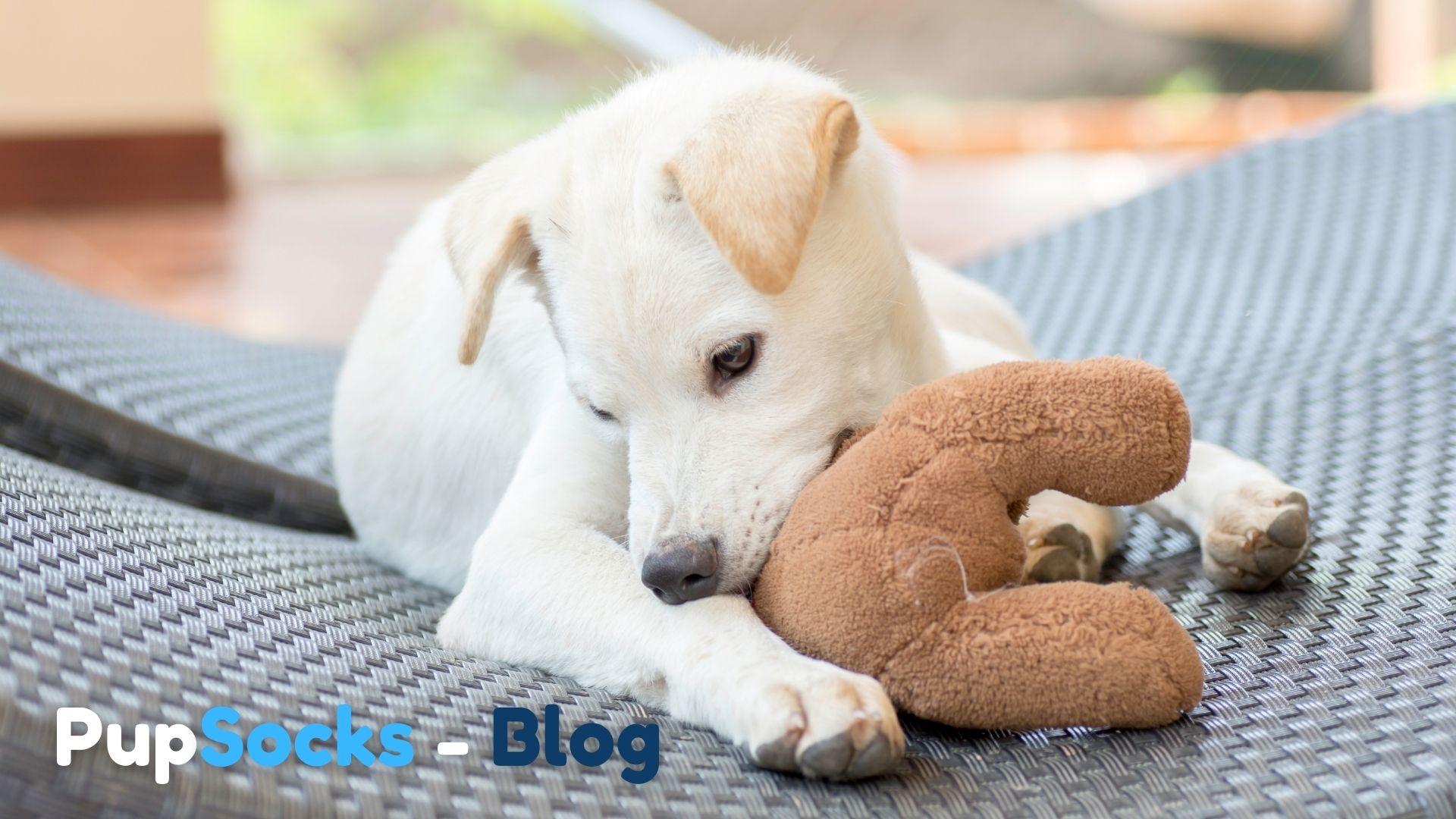 Co dělat když pes kouše věci?