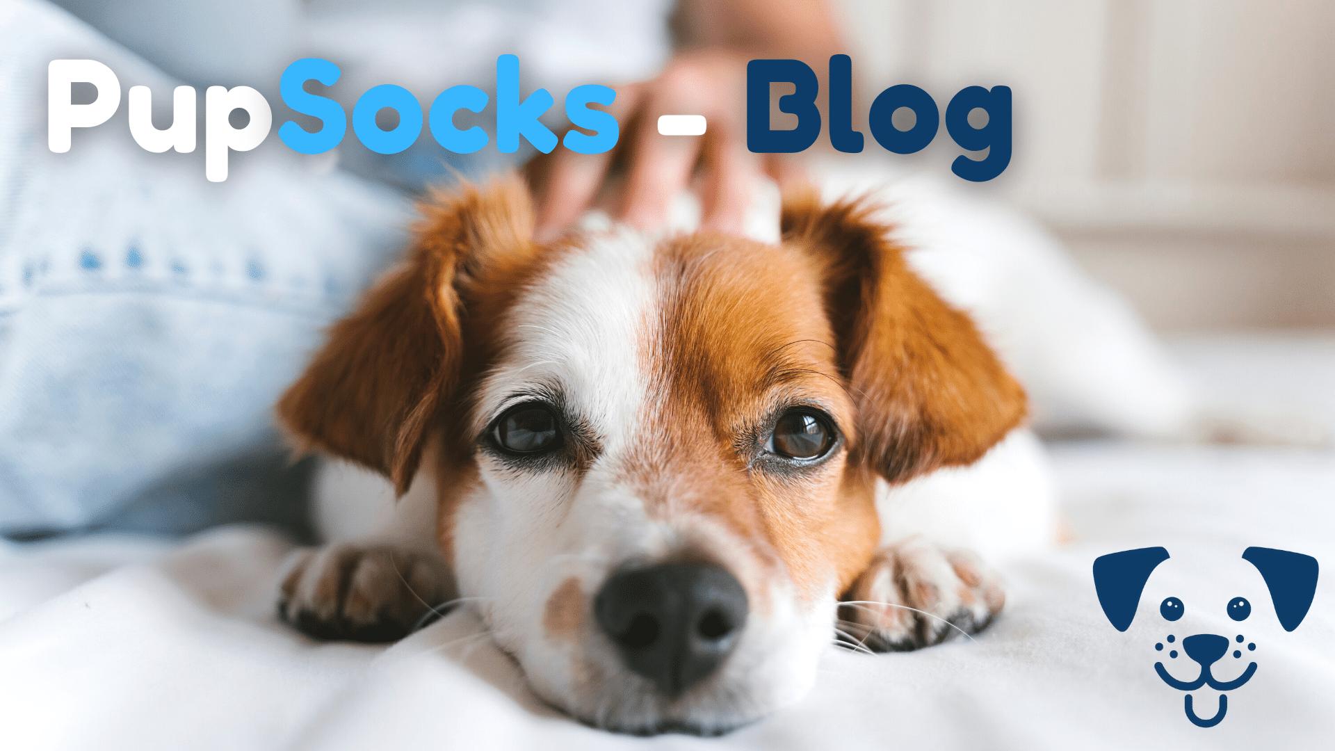 Přečtěte si náš PupSocks Blog